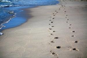 footprints-456732_640