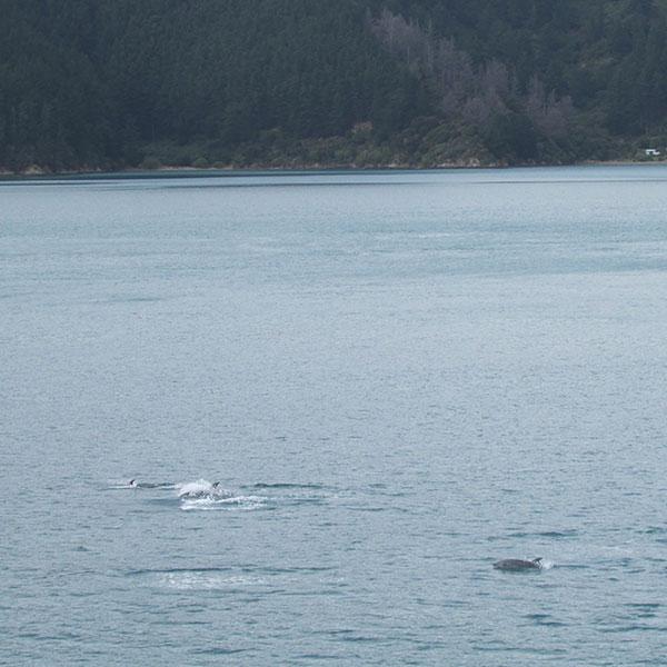 delfines isla sur