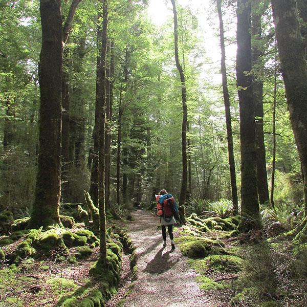 bosque kepler
