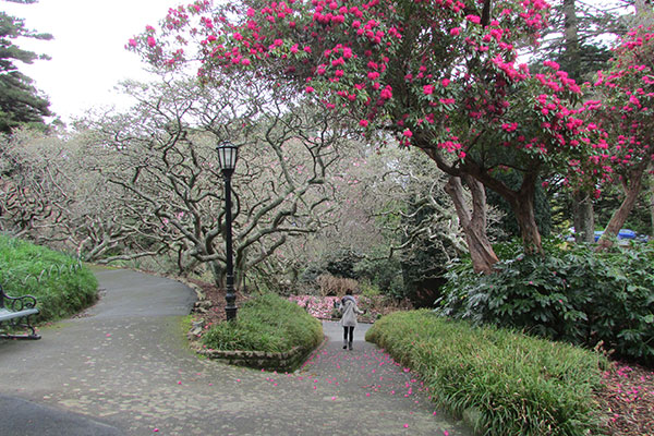 jardin botánico wellington