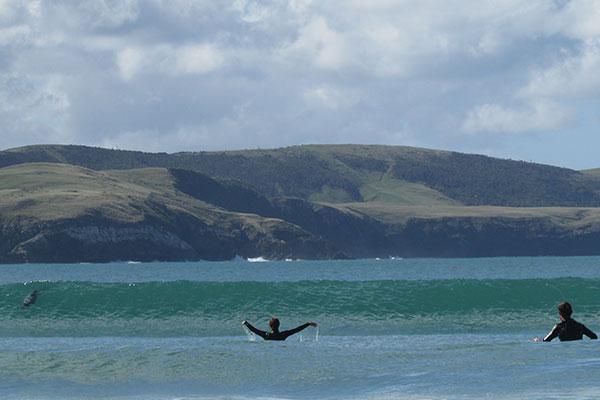 delfines curio bay