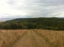 Grassland on the island