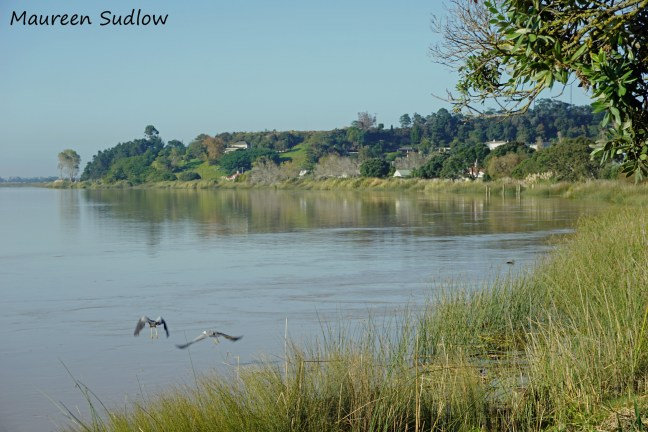herons on the river