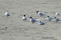 seabirds4
