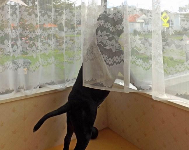 curtain-twitcher