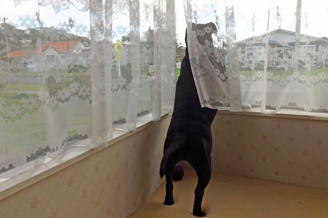 curtain-twitcher2