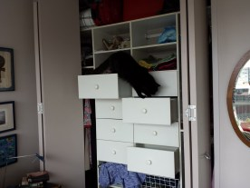 Mum opens draws for me to climb and have some enrichment play