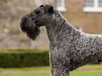 22 Most Expensive Dog Breeds Around the World