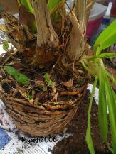 Akar menggumpal, tanaman liar dan umbi tanpa daun kering