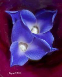 Bromeliad - Neoregelia 3