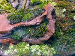 terrarium-moss-garden-oct-28-2016