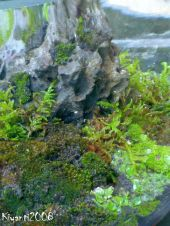 terrarium-moss-garden