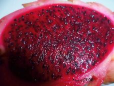 Dragon Fruit Red and Juicy