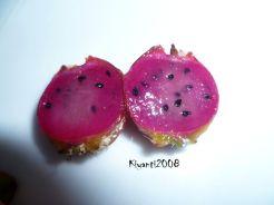 Epiphyllum - Disocactus ackermanii fruit