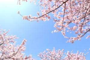東山動植物園 春まつり 01
