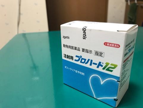 フィラリア予防注射の開始