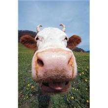 牛 鼻 牧場 呼吸