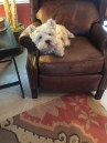 McDuff AKA Duffy, the grandparents baby-dog