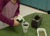 Finally, students covered their seeds with a small layer of soil and gave them two big sprays of water. Now they have to wait and see what kind of plant sprouts up!