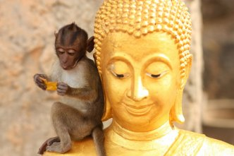 Affe und Buddha in Hua Hin, Thailand