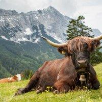 Wandern im Leutaschtal Österreich