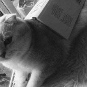 Lesezeichen Katze