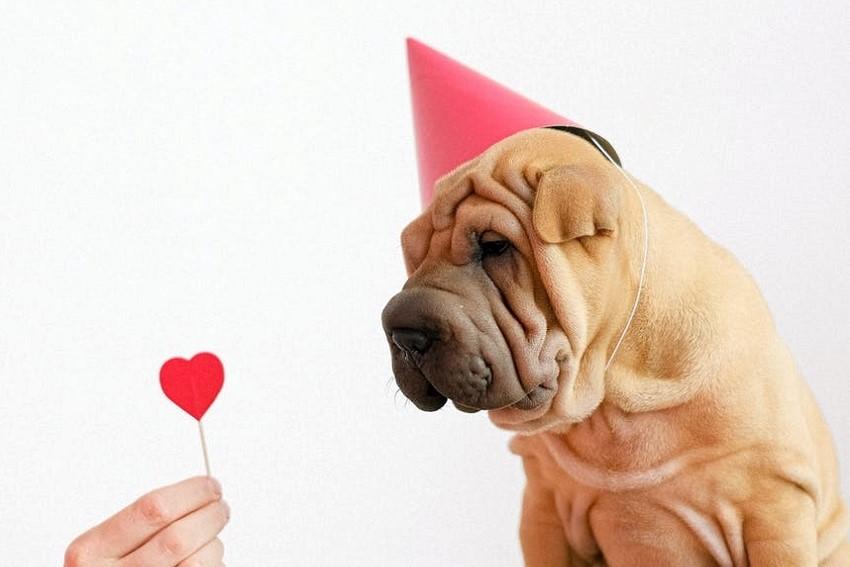Wir feiern den Tag des Hundes