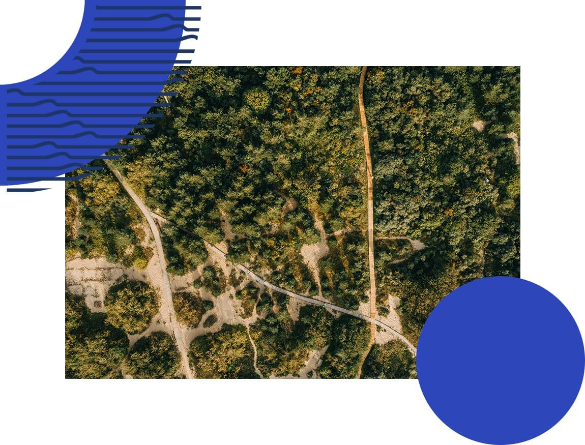 6.Miškas