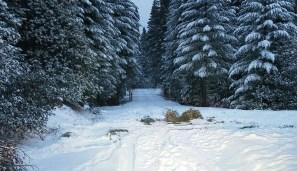 SAR_snow_2018_a