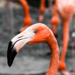 March of the Flamingos Fundraiser: Flamingo someone and support New Horizon's 5th and 6th graders