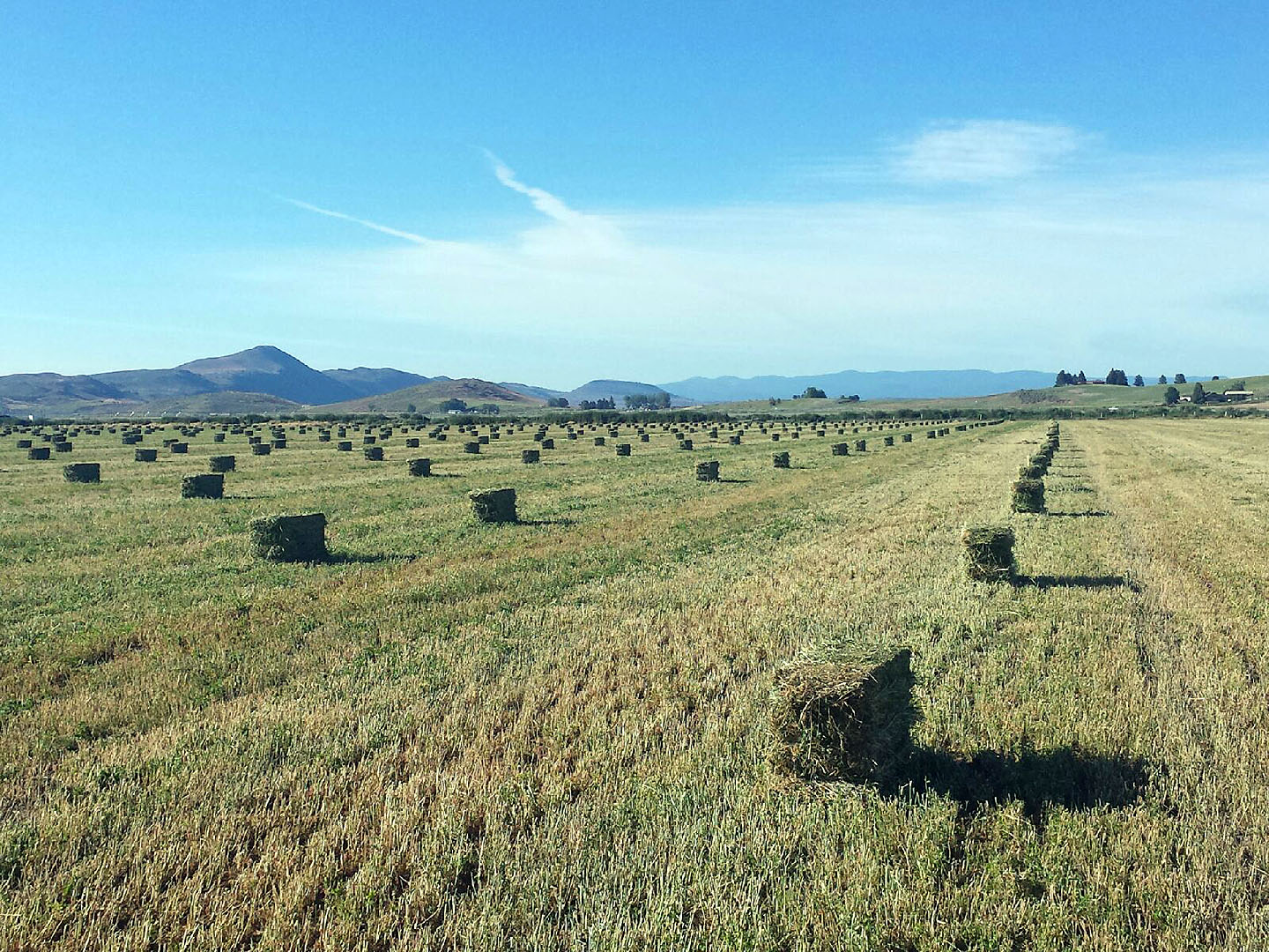 Alfalfa Ranch in Klamath Falls