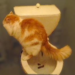 в туалете кошка