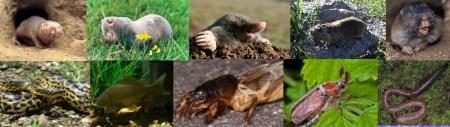 Fauna underground