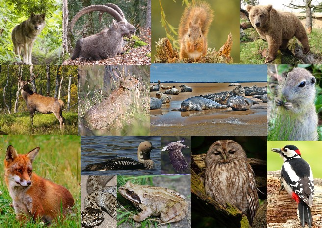 Fauna of Europe