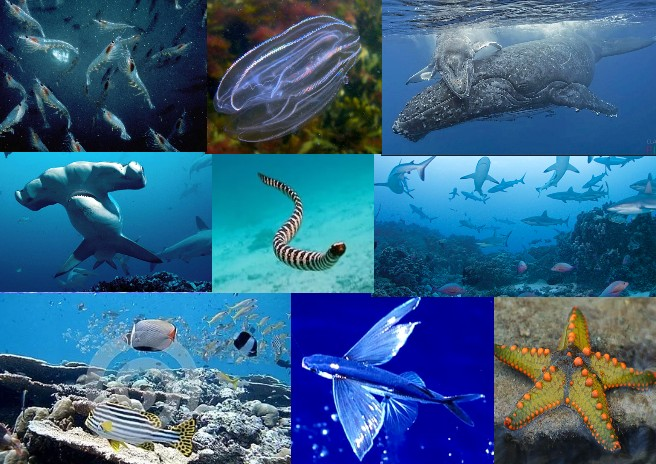 Fauna of the Indian Ocean
