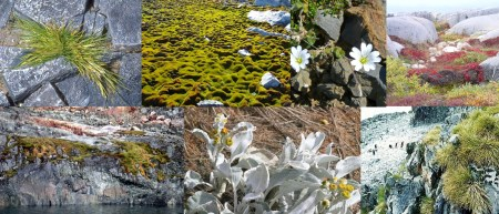 Flora of Antarctica