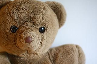 Medvídek (Zdroj: sfllaw @ Flickr)