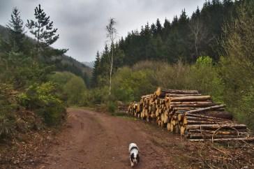 Der Aufstieg war schön, aber beschwerlicher als gedacht. Nur wenige Kilometer, aber stetig aufwärts. Der Hund hatte trotzdem gute Laune. Ich nicht so. Ich habe meinen Stress mitgebracht. Und zuviel Gepäck...