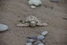 1 Tag alte Schildkröte