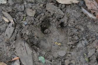 Tapir Spur