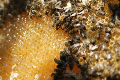 Bees and honey
