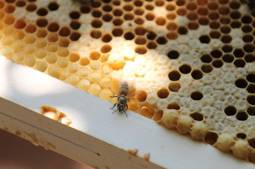 the new-born bee