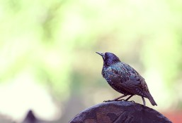New York bird in downtown area