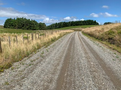 Gravel road leading up to a gras field and forest patch