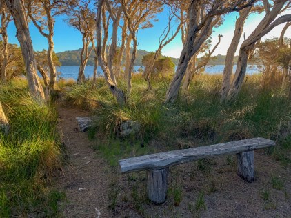 wooden bench in a forest beach setting with sun setting offscreen