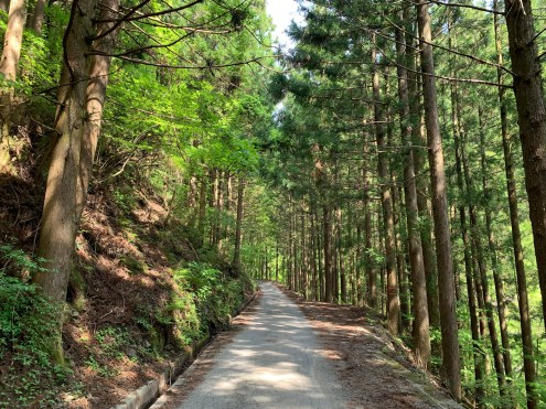 On my way exploring the Mt Tsurugi Forest Road, an 80km gravel trek.