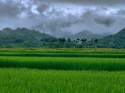 Foreboding rain clouds over the mountains, overlooking a rice paddy field. Route 193, Fenglin Township.
