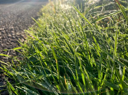Water droplets on blades of grass in the early morning, close to Bichlbach in Tyrol