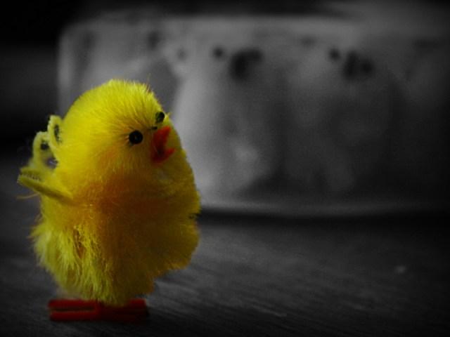 Skärtorsdagen firades med fika och upphängning av kycklingar