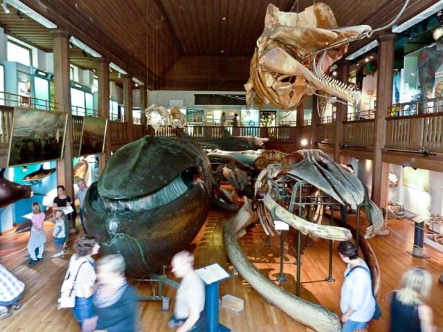 Ett besök på naturhistoriska